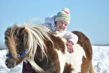 "Автобусная экскурсия на ферму ""В гости к мини-лошадям и пони"" фото"